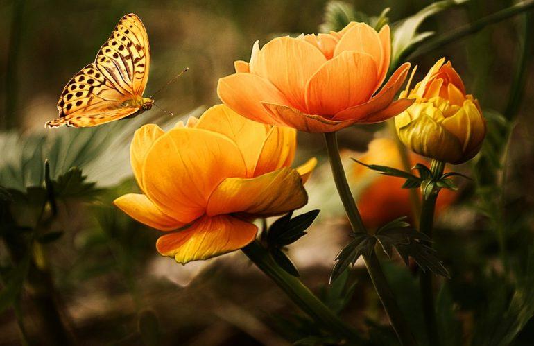 Quelles fleurs planter au printemps ?