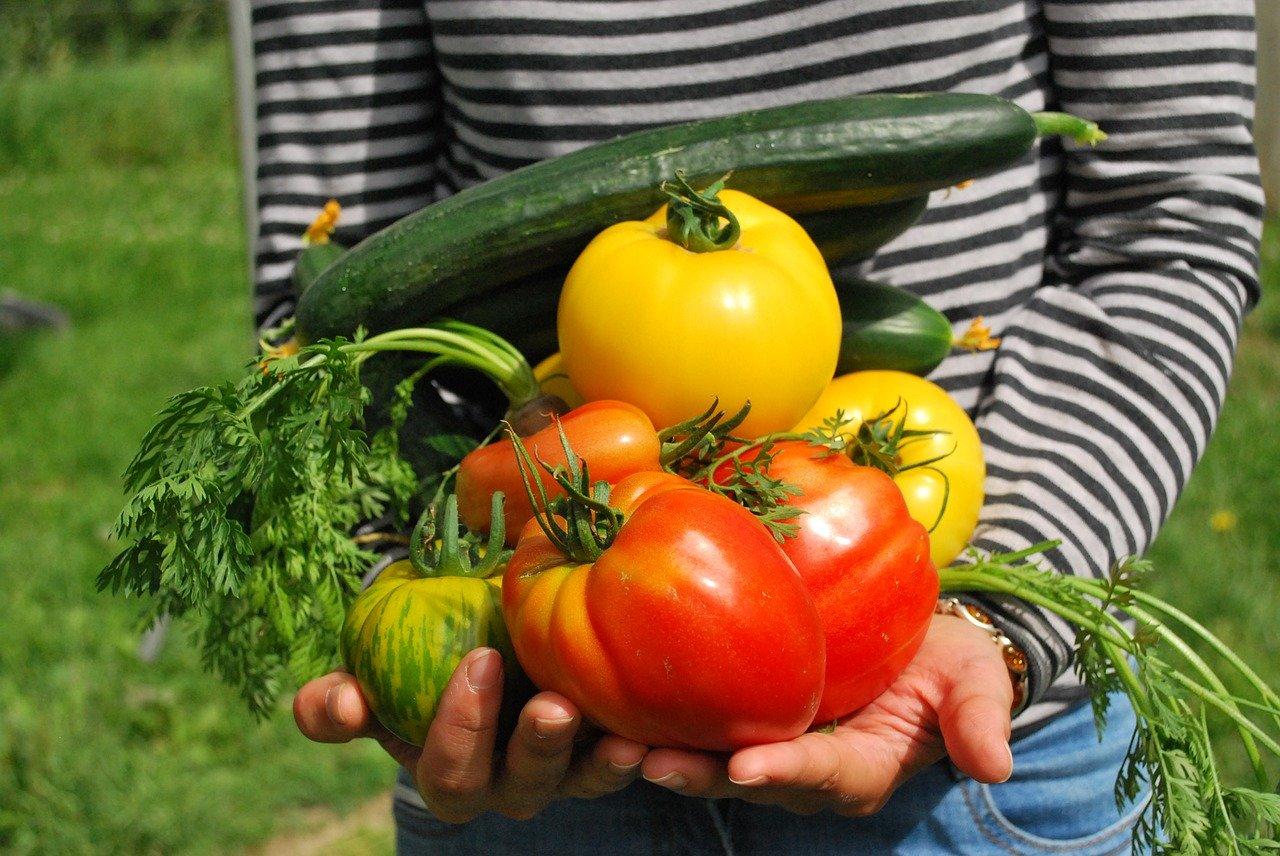 Potager, quels légumes choisir ?